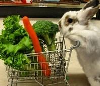 Быть Вегетарианцем? Легко!